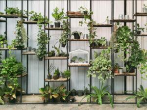 Pflanzenregale – verschönern Innenräume und den Außenbereich